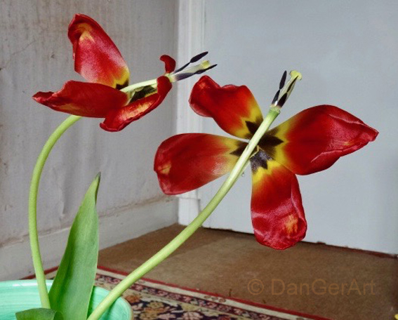Vlinderbloemen